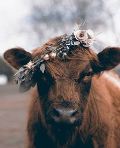 #flowercrown #floral #farm #farmanimal #cow