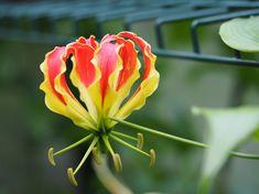 Barnslig lykke med knoller og røtter Rose, Flowers, Plants, Pink, Plant, Roses, Royal Icing Flowers, Flower, Florals