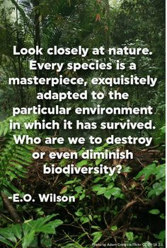 Look closely at nature. Every species is a masterpiece, exquisitely adapted to the particular environment in which it has survived. Who are we to destroy or even diminish biodiversity? -E.O. Wilson