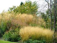 ornamental grasses - Google Search