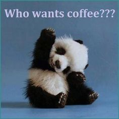 who wants coffee quotes cute quote coffee morning panda coffee humor | Come to Bagels and Bites Cafe in Brighton, MI for all of your bagel and coffee needs! Feel free to call (810) 220-2333 or visit our website www.bagelsandbites.com for more information!