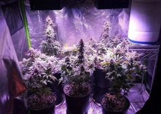 Best The Best LED Grow Lights for 2017 and beyond - 420 Grow Lights