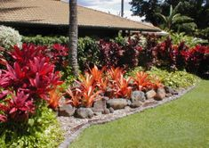 South florida tropical landscaping ideas our services for Easy to maintain garden borders