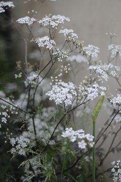 #Flora