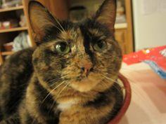 Lucy! is soooooooooo cute......