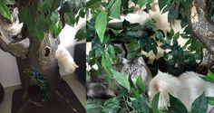 Hidden Hollow Cat Tree with golden highlights
