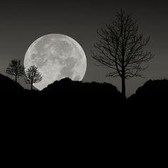 The Moon by Carlos Gotay Martinez