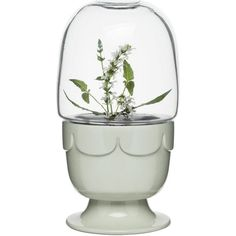 Planter on Stand w/ Glass Dome in Sage Green design by Sagaform (40 CAD) ❤ liked on Polyvore featuring home, home decor, planters, sagaform, glass planter, glass dome and glass home decor
