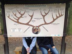 #double #deer
