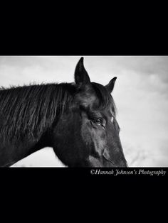 Black & White Horse Photo