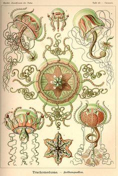 Ernst Haeckel, Artist