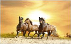 Wild Horses Wallpaper   wild horse live wallpaper, wild horse live wallpaper apk, wild horses running wallpaper, wild horses wallpaper, wild horses wallpaper border, wild horses wallpaper desktop, wild mustang horse wallpaper