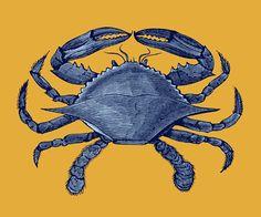 oldbookillustrations: Blue crab