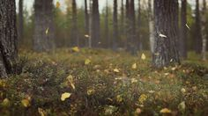 autumn gifs | loop nature fall autumn falling leaves autumn leaves falling…