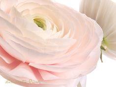 Blumenbild: Zwei im Frühlingsrausch. Leinwandbild, Kunstdruck oder Fototapete im Wunschformat