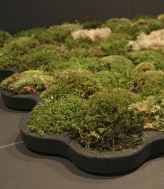 70 Balls of Moss in the Frame