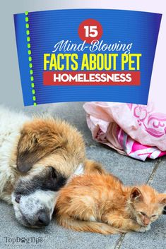 15 Mind-Blowing Fact 15 Mind-Blowing Facts About Pet Homelessness Shelter Dogs, Animal Shelter, Rescue Dogs, Shelters, Black Dog Syndrome, The Shelter Pet Project, Homeless Dogs, Mind Blowing Facts