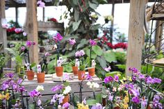 Orchids #holidays #plants