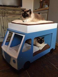 Cat camper van