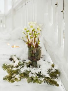 Julrosen är drottningen bland julens blommor.   Julros, heleborus
