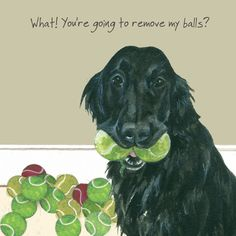 This Flat Coated Retriever dog greeting card features the beautiful Bounty practising her favourite party trick. Flat Coated Retriever, Retriever Dog, Watercolor Artwork, Watercolor Animals, Watercolour, Dog Lover Gifts, Dog Lovers, Dog Cards, Little Dogs