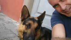 Pando sul Ponte, una vita col naso tra i banchi. Firenze saluta il suo cane antidroga :http://www.qualazampa.news/2018/03/13/pando-sul-ponte-una-vita-col-naso-tra-i-banchi-firenze-saluta-il-suo-cane-antidroga/