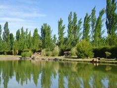 Complejo Las Fincas San Rafael tiene una superficie de 2,5 Has. cerradas. Las cabañas están ubicadas en el corazón de San Rafael, Mendoza a 10 KM del Dique Valle Grande y el Cañon del Atuel. A 8 KM del Centro, a 30 KM de Los Reyunos y a 40 KM del Dique El Nihuil. Ushuaia, Mendoza, Vino Malbec, San Rafael, Grande, River, Mountains, Nature, Outdoor
