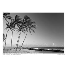 Palm trees and beach, Salt Pond Beach, late afternoon. Kauai island,... ❤ liked on Polyvore featuring backgrounds, pics, icons, pictures and scenery