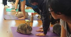 Sunberry Fitness in Richmond, British Columbia, recently hosted its second bunny yoga class. It sold out in three days and has a massive waiting list. Beauty Uses Of Coconut Oil, Coconut Oil Uses, Healthy Recipes For Weight Loss, Super Healthy Recipes, Most Nutritious Foods, Healthy Foods To Eat, Bunny Yoga, Benefits Of Whole Grains, Healthy Seeds