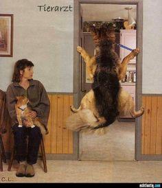 Hund möchte nicht zum Tierarzt