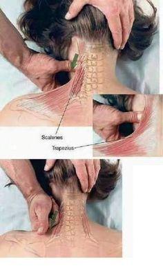 Shiatsu Massage – A Worldwide Popular Acupressure Treatment - Acupuncture Hut Massage Tips, Good Massage, Massage Therapy, Neck Massage, Massage Body, Facial Massage, Reflexology Massage, Trigger Points, Pain Management