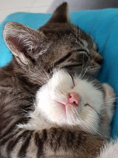 cute cats cuddling snuggles süße katzen kuscheln kuscheln cute cats cuddling snuggles # Memes cute cats - Drawing cute cats - With Captions cute cats Cute Cats And Kittens, Baby Cats, I Love Cats, Kittens Cutest, Tabby Kittens, Kittens Playing, Funny Kittens, Cute Funny Animals, Cute Baby Animals