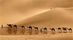 Camel trekking Wadi El Rayan tour starts by picking you up from your hotel in Fayoum. And then, we will drive to Wadi El Rayan, a large depression in the