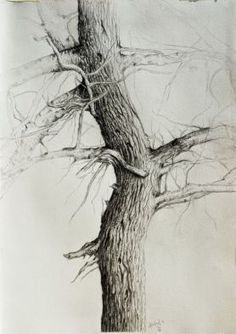 Material tree trunk drawing, tree line drawing, branch drawing, drawing . Tree Trunk Drawing, Tree Line Drawing, Tree Drawings Pencil, Branch Drawing, Ink Pen Drawings, Graphite Drawings, Realistic Drawings, Drawing Trees, Tree Sketches