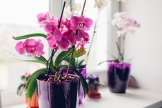With Mother's Day fast approaching, houseplants make great gifts! Orchid Roots, Moth Orchid, Orchid Plants, Leafy Plants, Water Plants, Tropical Plants, Types Of Mulch, Types Of Plants, Hortensia Hydrangea