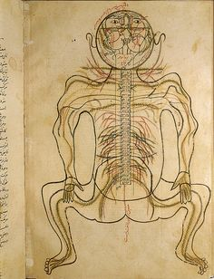 برگ مصور از کتاب تشریح بدن منصور بن محمد بن احمد بن یوسف بن الیاس شیرازی،1384 میلادی DescriptionThe nervous system, from MANSUR'S ANATOMY, authored by the Persian scholar and physician, Mansur ibn Ilyas (ca. 1370-1423). The figure is viewed from the back with the head hyperextended. The pairs of nerves are indicated by inks of contrasting colors. Ca. 15th or early 16th-century.