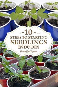Growing your own seedlings from seed offers you more flexibly and control over your garden. You can choose your favorite varieties, grow the number of plants you need, and work within the planting dates that