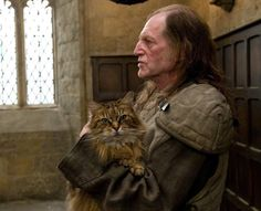Norris'i oynayan 3 farklı kedi vardı: Maximus, Alanis ve Cornelius. Harry Potter Characters, Harry Potter World, Harry Potter Hogwarts, Ron And Hermione, Hermione Granger, No Muggles, Hogwarts Mystery, 2 Movie, Funny Cat Memes
