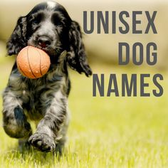 dog names Are you looking for a gender-neutral dog or puppy name Look no further. Unisex names are unique and work for both male and female dogs. Pick from cool names like Ryan, Tyler, of maybe even Sloanheres 100 to choose from. Cute Names For Dogs, Pet Names, Cool Names, Cute Dogs, Names Baby, Sheep Names, Funny Dogs, Puppies Names Female, Female Names