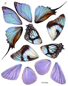 OOAK Artist Emporium - Fairy Wing Prints on transparent film or vellum - very in. - Formen - OOAK Artist Emporium – Fairy Wing Prints on transparent film or vellum – very inexpensive and m - Butterfly Crafts, Butterfly Wings, Dragonfly Wings, Fairy Wings, Polymer Clay Art, Fairy Dolls, Collage Sheet, Altered Art, Paper Dolls