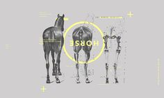 "Horses - lat ""equorum"" by Marvin Paul Schwaibold"