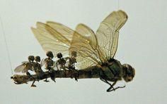 Swarm 2004 by Tessa Farmer (detail)