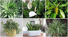 Íme az oxigénboma növények! Már egy elég a hálószobádba, hogy tökéletesen megtisztítsa a levegőt | CivilHír