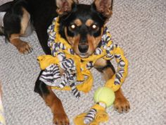 Oh come on, who can resist that face? http://www.etsy.com/listing/92864729/durable-fleece-machine-washable-dog-tug