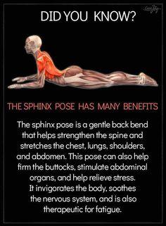 yoga fitness,yoga for beginners,yoga poses,yoga stretches Yoga Fitness, Fitness Tips, Fitness Motivation, Health Fitness, Physical Fitness, Fitness Games, Fitness Logo, Enjoy Fitness, Health Yoga