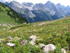 Talus Lodge - Alpine Meadow
