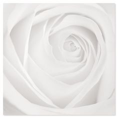 ''Purity'' - Black And White Photography All White, Pure White, White Light, White Magic, Floral Photography, Black And White Photography, White Roses, White Flowers, Blanco White