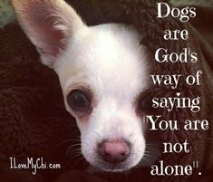 """Dogs are God's way of saying """"You are not alone."""""""