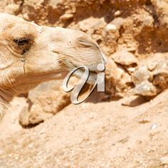 Free Stock Photos, Royalty Free Images, Camel, Sky, Brown, Animals, Heaven, Animales, Animaux