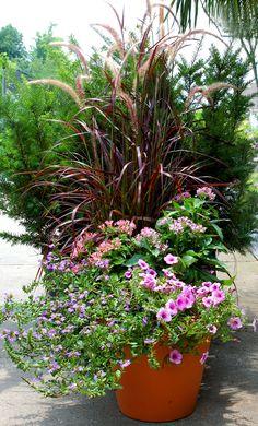 Sun Container Garden (1)Purple fountain grass (2)Pentas Butterfly series (3)Fan flower (4)Petunia 'Suncatcher Pink Vein'